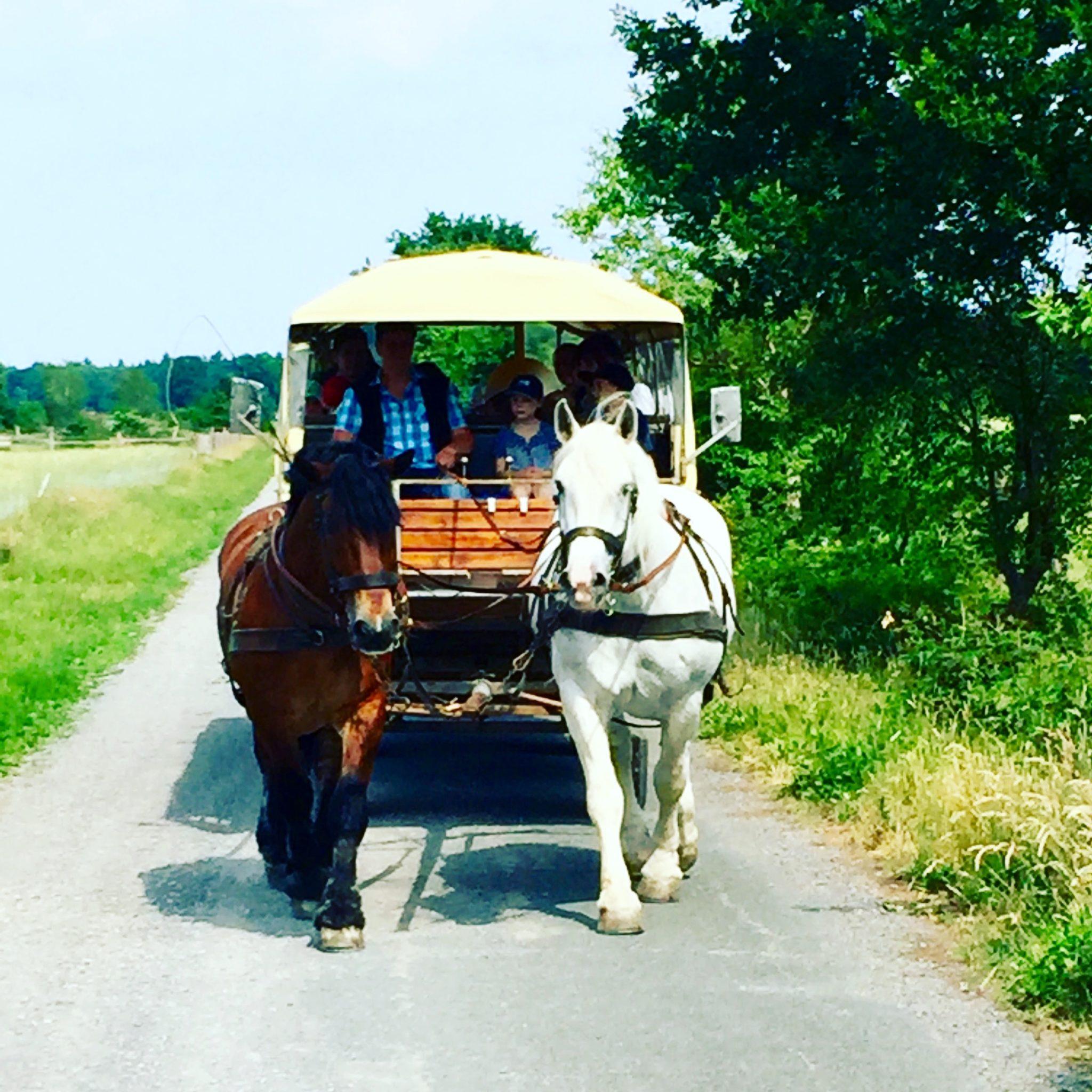 Familotel Landhaus Averbeck Familienurlaub Reisen mit Kindern Niedersachsen Pferdekutsche