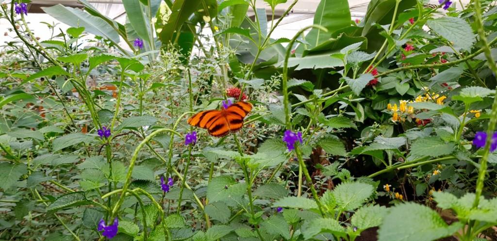 Luxemburg Familienurlaub Schmetterlingsgarten