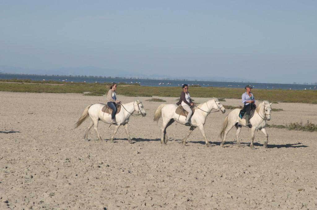Frankreich Provence Camargue Ausreiten Camarguepferde Flusskreuzfahrt A-Rosa