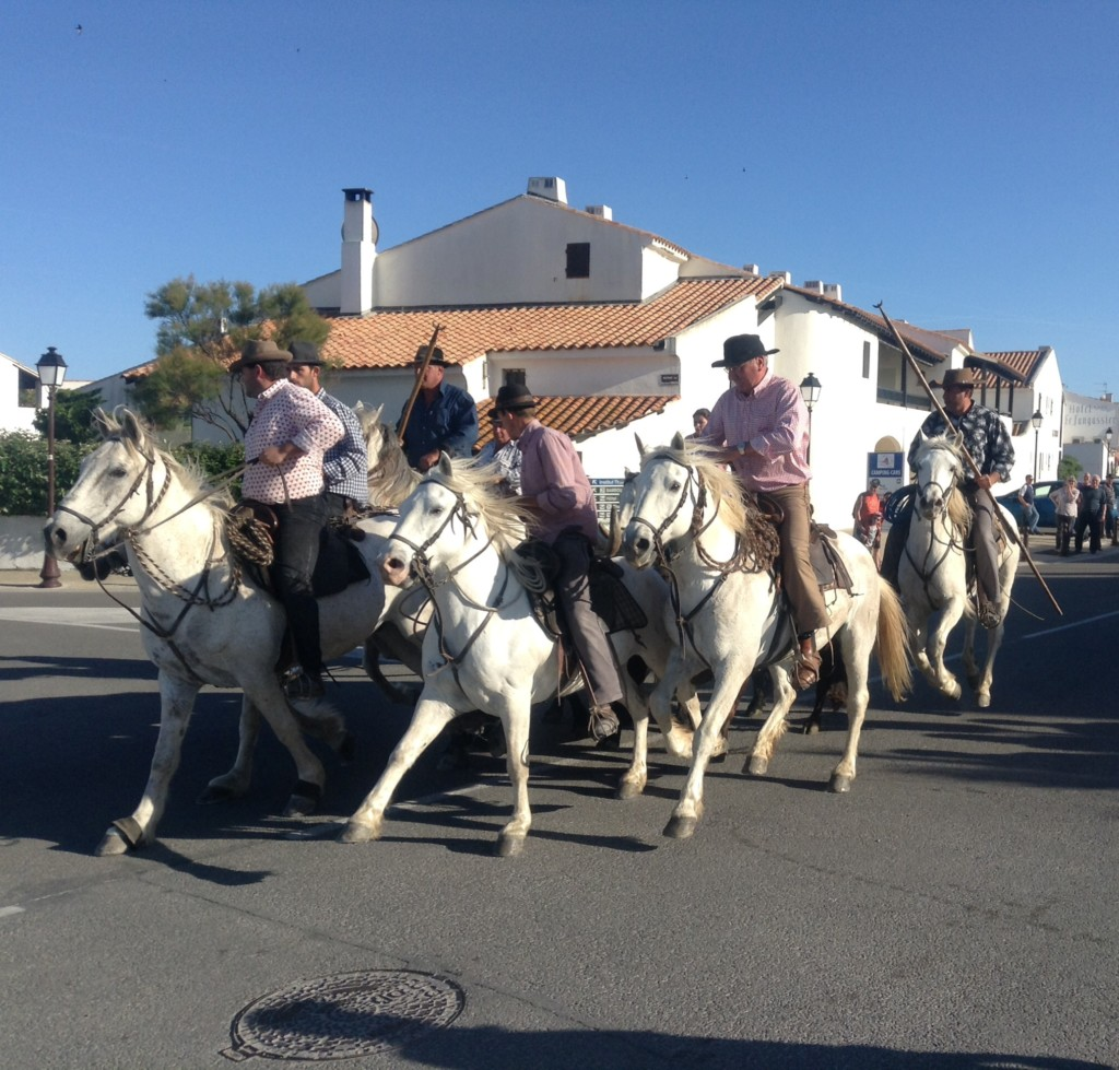 Frankreich Provence Camargue Stiere Manadiers Flusskreuzfahrt A-Rosa