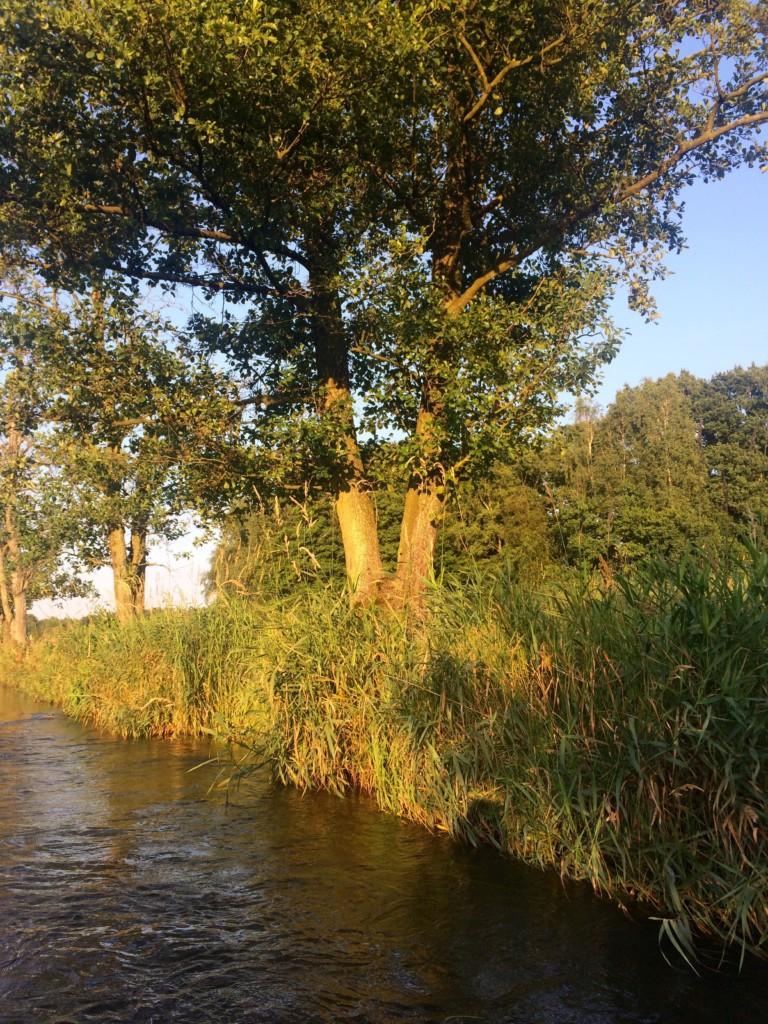 Kanu Stör Schleswig-Holstein Arpsdorf Willenscharen