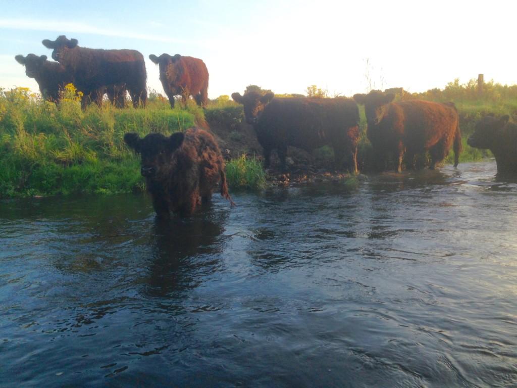 Kanu Stör Schleswig-Holstein Galloways Wasser