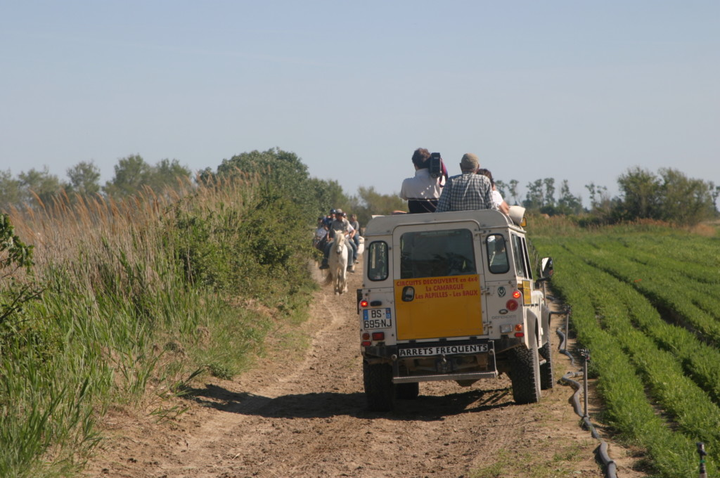 Provence Frankreich A-Rosa Camargue Jeep-Safari