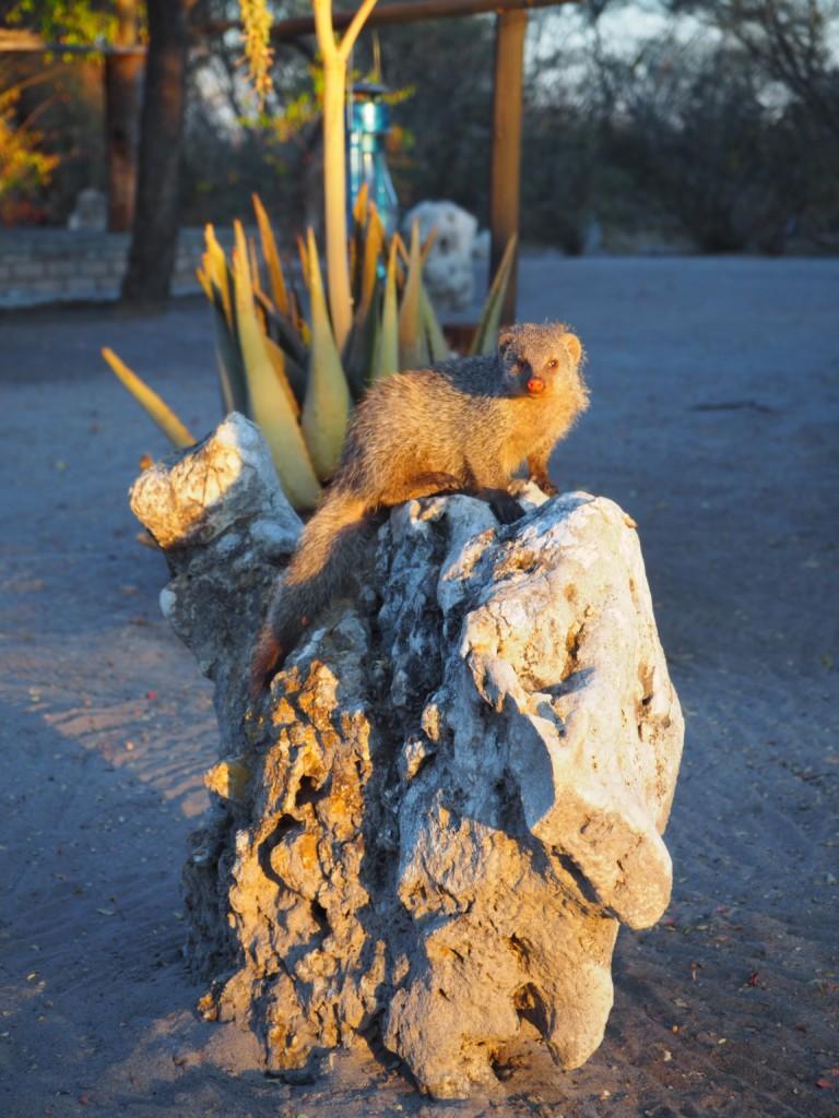 Bushmen camp Fiume Namibia Grootfontain Buschmänner San Safari lebendiges Museum Familienreise Manguste