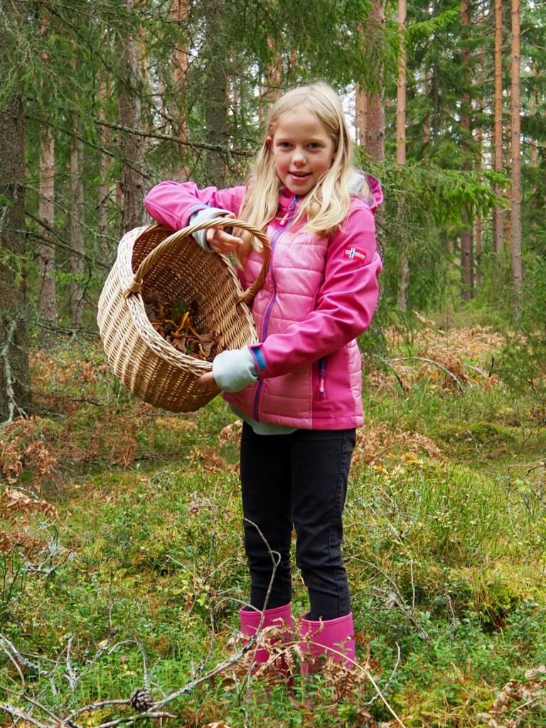 Pilze sammeln in Smaland Schweden Herbst Wald