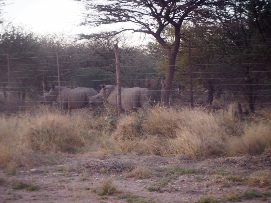 Namibia Omaruru Mount Etjo Nashörner