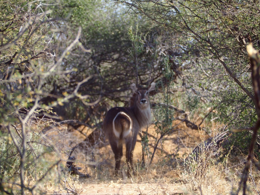 Namibia Omaruru Game drive Mount Etjit Safari Lodge Kudu