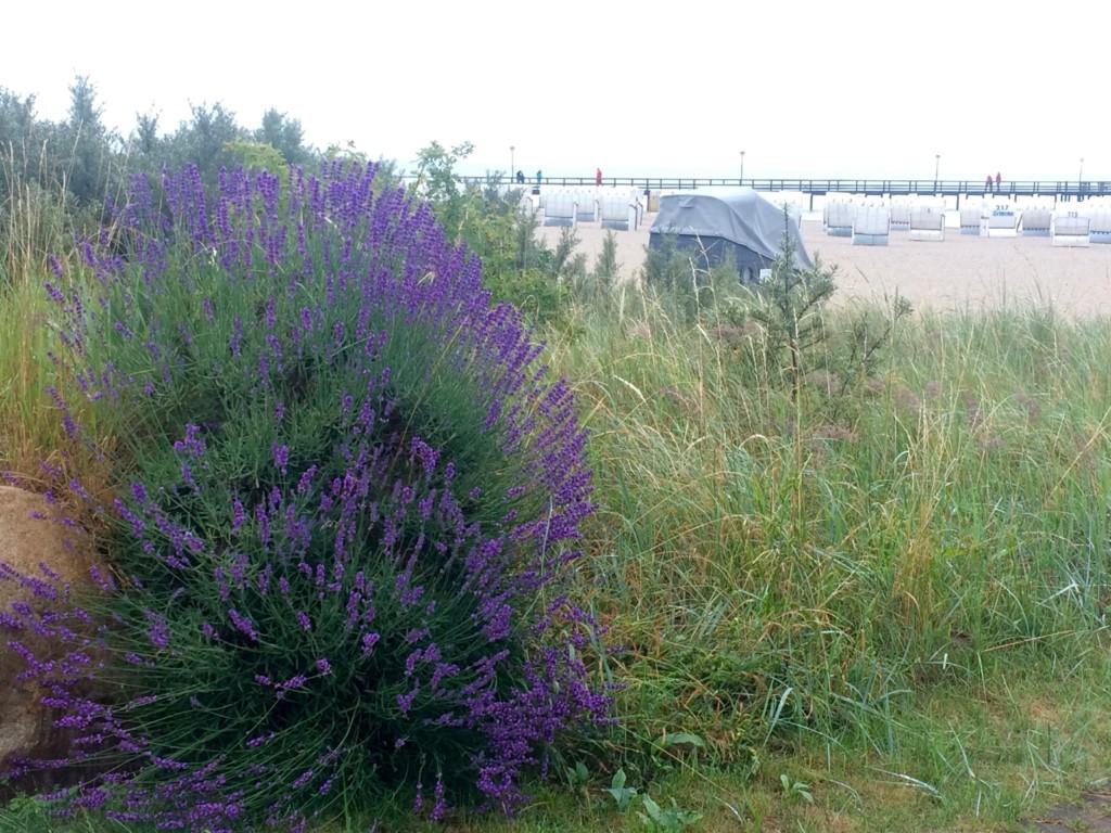 Lavendel Strand Strandkörbe Hotel Strandkind Pelzerhaken Lübecker Bucht Ostsee Schleswig-Holstein