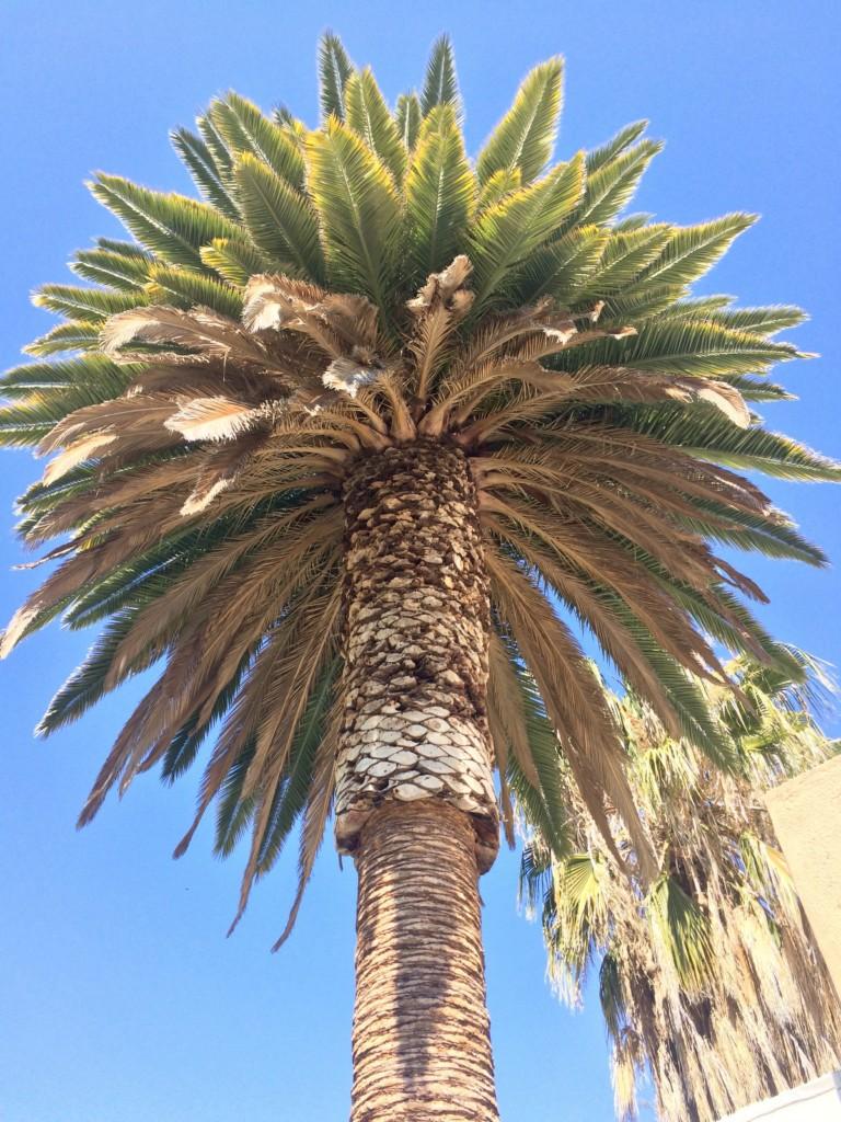 Windhoek Namibia Hauptstadt Afrika Palme
